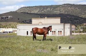 """Paola Pivi """"Scendi a Valle"""" archivio Fondazione Truissardi 2015"""